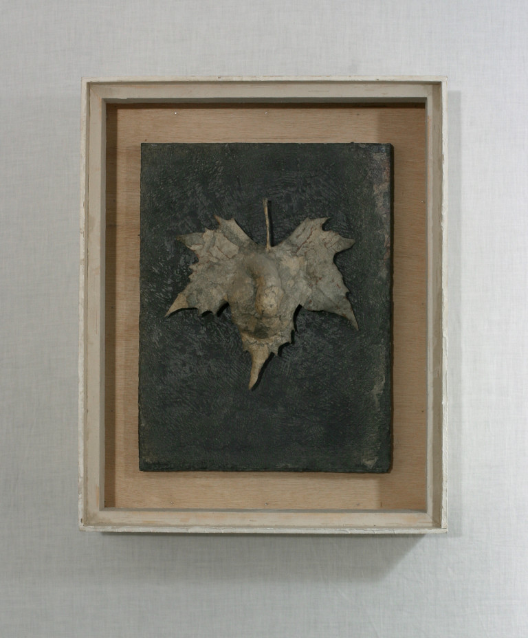 Male Fig Leaf (Hommage a MD)